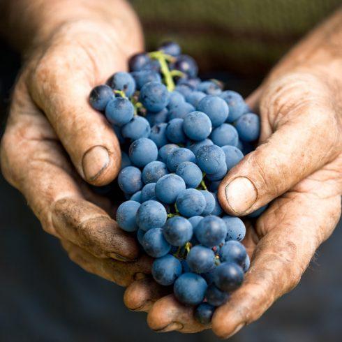 NEU: Weinimporte aus Frankreich!